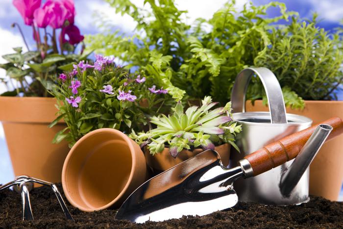 Инвентарь для растений